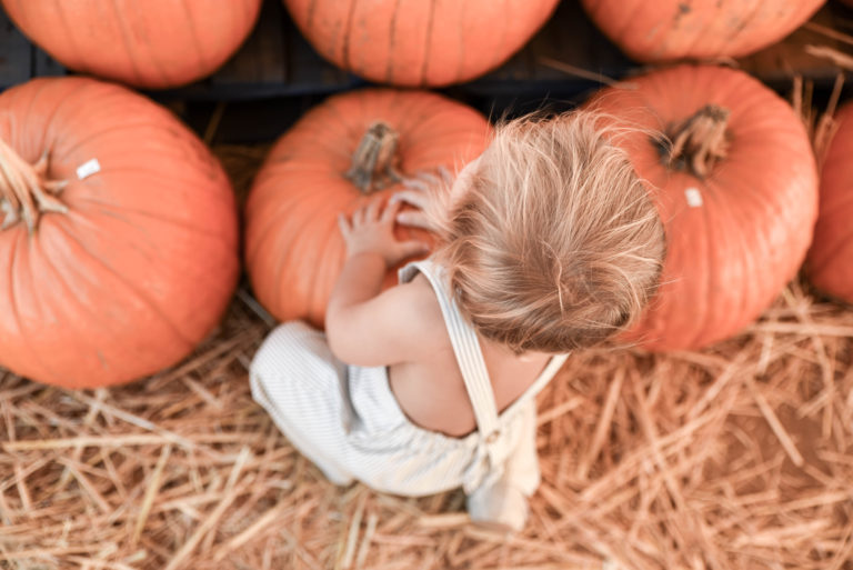 Pumpkin patching and corn mazes