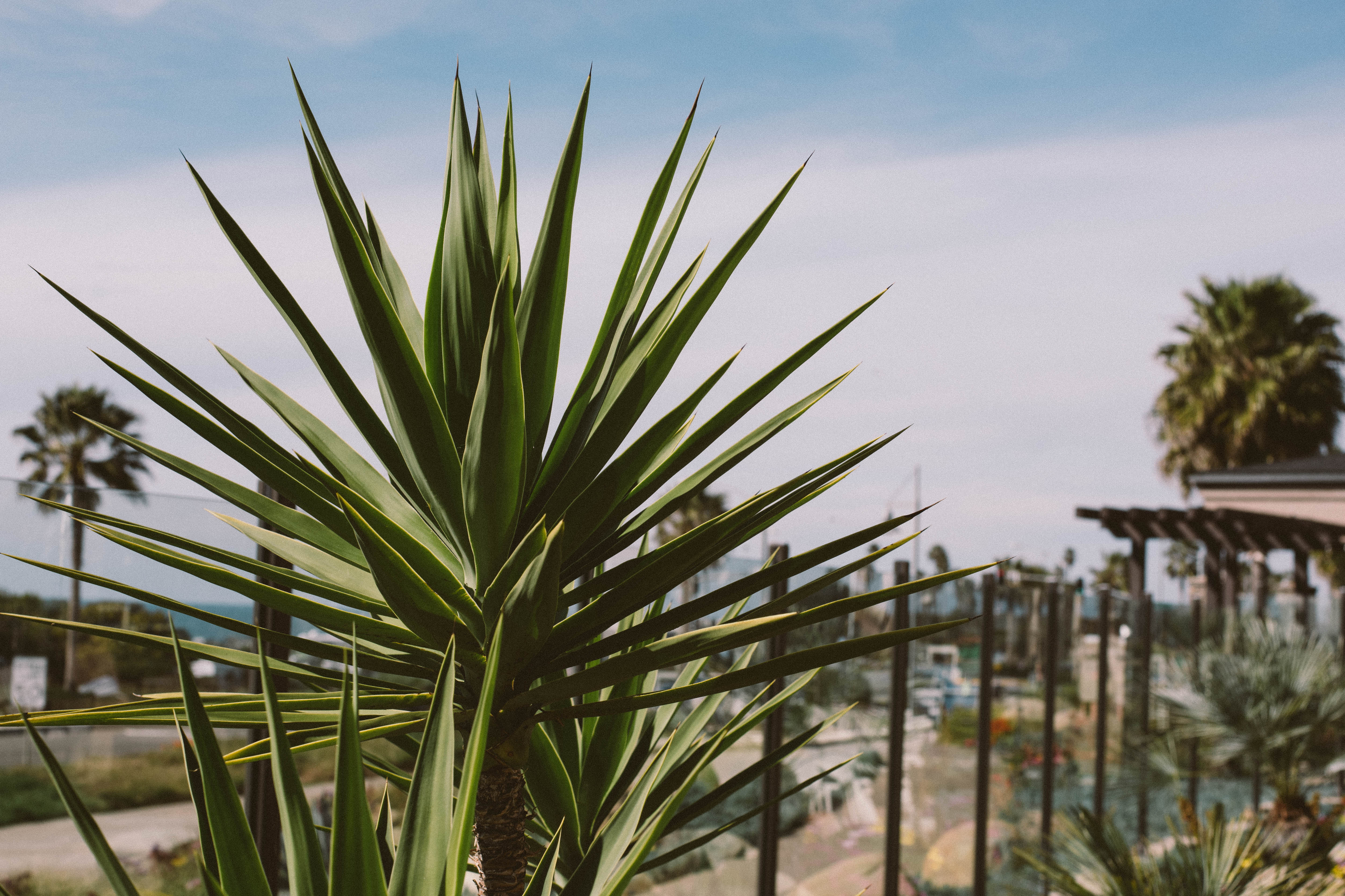 Staycation: Cape Rey Carlsbad